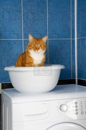 Photo pour Photo amusante du chat assis dans un lavabo dans une salle de bain - image libre de droit