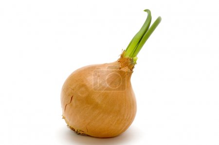 Photo for Object on white food - bulb onion - Royalty Free Image