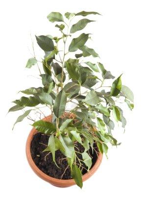 Foto de Objeto en blanco - flor interior plantas closeup - Imagen libre de derechos