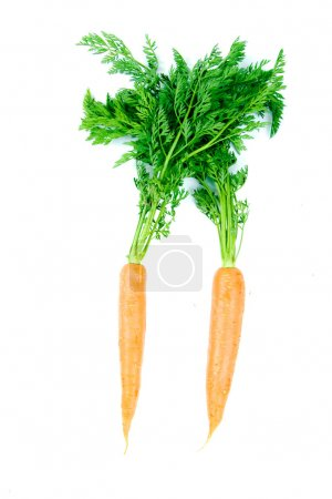 Photo for Two fresh and ripe orange carrots isolated on white background. - Royalty Free Image
