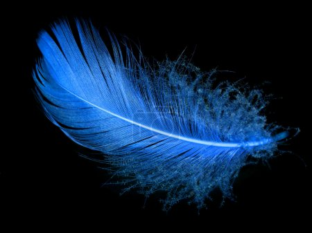 Single blue feather over black background...