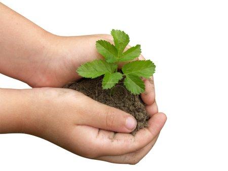 Photo pour Les mains des enfants tenant une petite plante poussant à partir du sol - image libre de droit