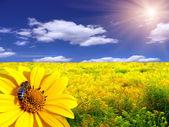 "Постер, картина, фотообои ""Пчела на цветке"""