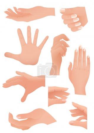 Illustration for Human palm set, vector illustration - Royalty Free Image