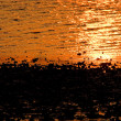 An oyster or clam bed at sunrise or sunset....