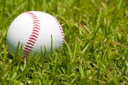 Photo pour Une balle de baseball sur un ordre de grandeur vert herbeux. - image libre de droit