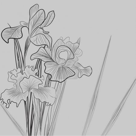 Illustration for Monochrome illustration with Iris flowers - Royalty Free Image