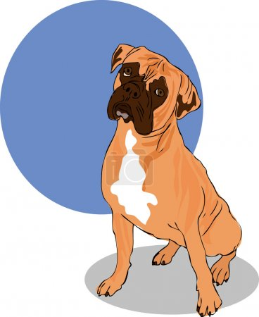 Muscular Brown, White And Black Boxer Dog Head