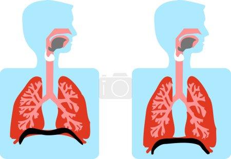 Anatomy Vector Medical illustration