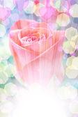 Jemné růže s rozmazané světla