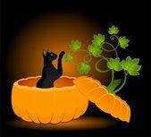 Pumpkin and black cat
