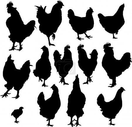Silhouette of hens and roosters