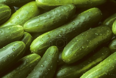 Photo for A pile of fresh cucumbers lying diagonally with drops of water - Royalty Free Image