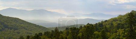 Kind on a ridge of Sihote-Alin, Russia