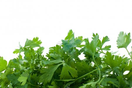 Some fresh green parsley
