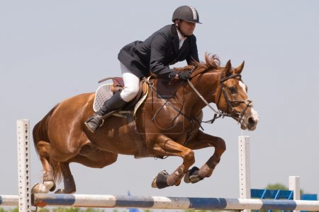 Photo for Chestnut stallion and the rider jumping on horse jumping show - Royalty Free Image