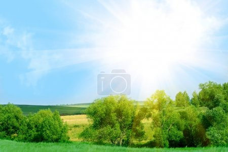 Photo for Summer landscape - Royalty Free Image
