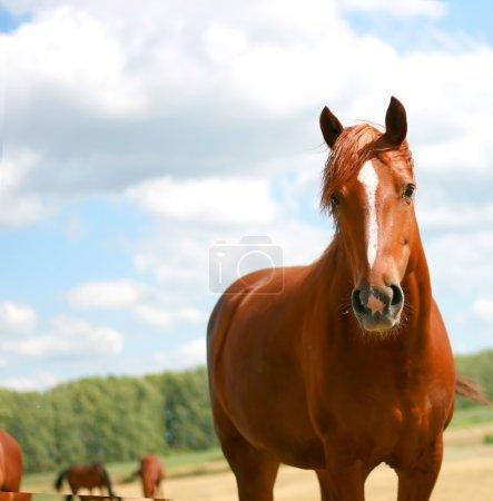 Portrait of beautiful horse
