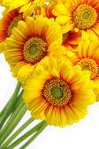 Yellow gerber bouquet