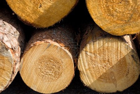 Photo pour Gros rondins, bois brut - image libre de droit