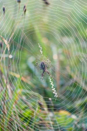 Spinnennetz aus nächster Nähe