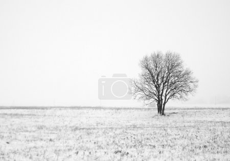 Photo for Winter landscape with lonely tree in field - Royalty Free Image