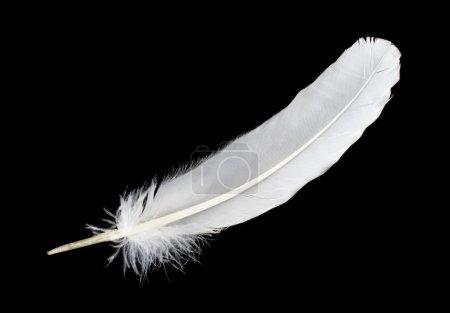 Photo pour Gros plan grosse plume blanche, isolée sur noir - image libre de droit