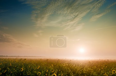 Sunrise on foggy morning in the countryside...
