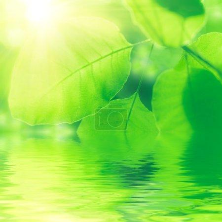 Photo pour Feuilles vertes et fond de soleil - image libre de droit