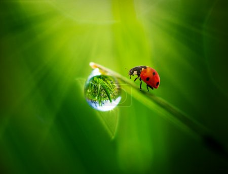 Photo for Ladybug sitting on a green leaf - Royalty Free Image