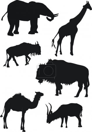 Illustration for Collection of animals inclusive elephant, bison, camel, goat, antelope and giraffe - Royalty Free Image