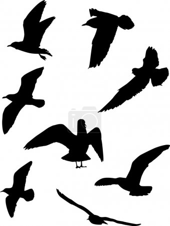 Illustration for Illustration with gull silhouette collection on white - Royalty Free Image