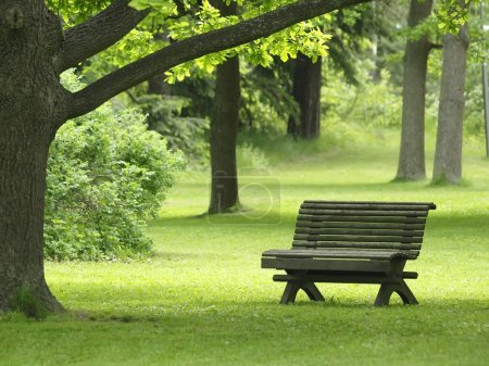 Photo for A park bench in a green park with trees in summer - Royalty Free Image