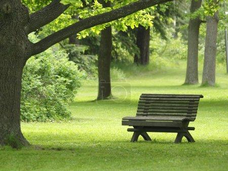 Photo pour Un banc dans un parc de verdure avec des arbres en été - image libre de droit