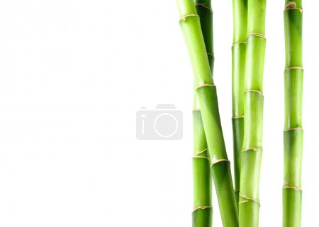 Photo for Green bamboo - Royalty Free Image
