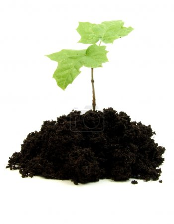 Photo for Plant sprout growing in soil - Royalty Free Image