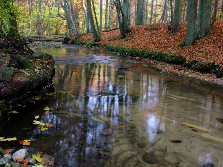 Photo for River in autumn forest - Royalty Free Image