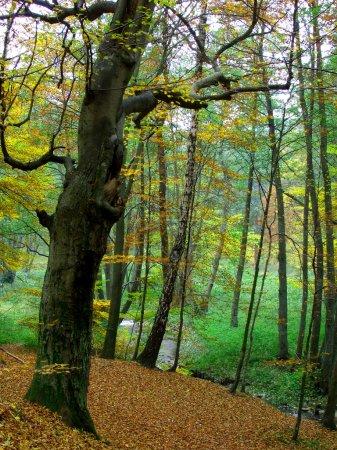 Photo for Autumn season in Poland - Royalty Free Image
