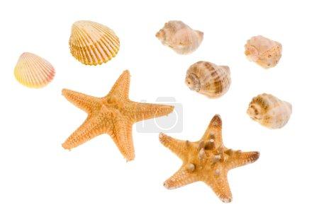 Star-fish and seashells