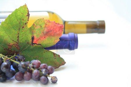 Wine bottels and grape leaves