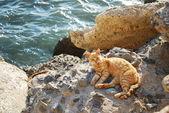 Cat in Cadiz