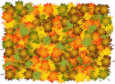 Composite of various autumn leaves to backgrounds Vector illustration