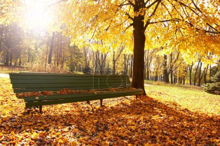 Autumn, fall background