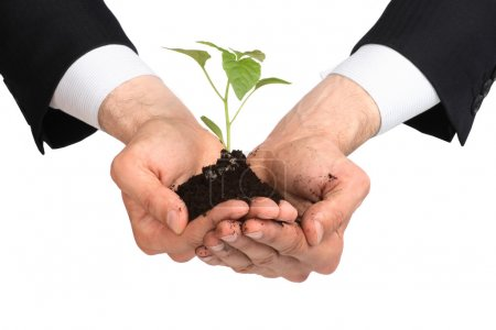 Photo for Business men, plant - Royalty Free Image