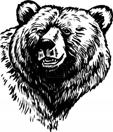 Illustration pour Ours brun sauvage est isolé sur fond blanc - image libre de droit
