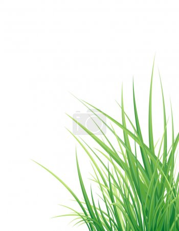 Illustration for Spring green grass isolated on the white background - Royalty Free Image