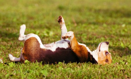 Photo for The dog lie on grass and dreaming - Royalty Free Image