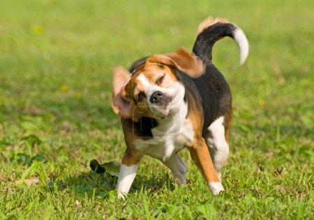 Photo pour Le chien dit non - image libre de droit