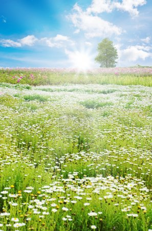 Photo for Spring field with daisy and colorful flowers - Royalty Free Image