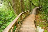 Cesta do přírody